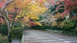 京都府-長岡京市-光明寺-1.jpg