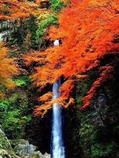 養老の滝-2.jpeg